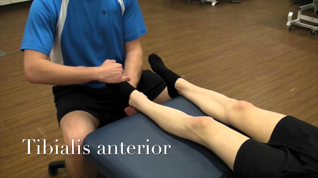 anterior deltoid manual muscle test