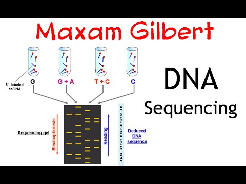 Application of maxam gilbert sequencing