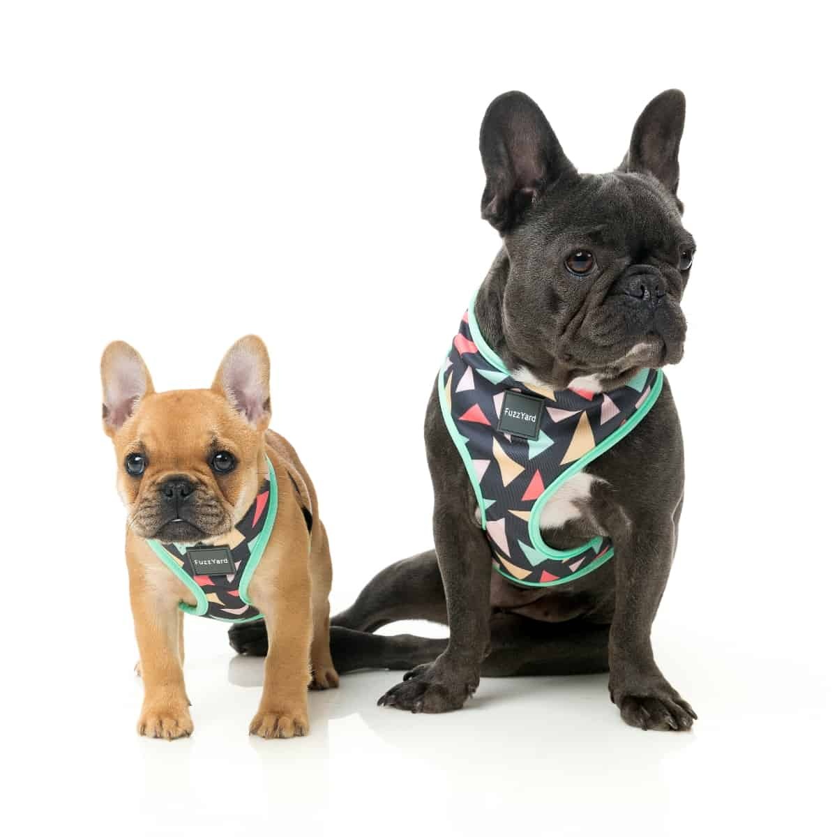 pets at home dog harness instructions